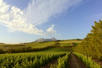 wine estate wedding venues