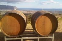 barrels-with-a-view