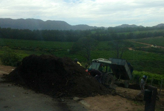 Adding Our Compost to Semillon