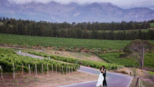 Wedding couple in vineyards